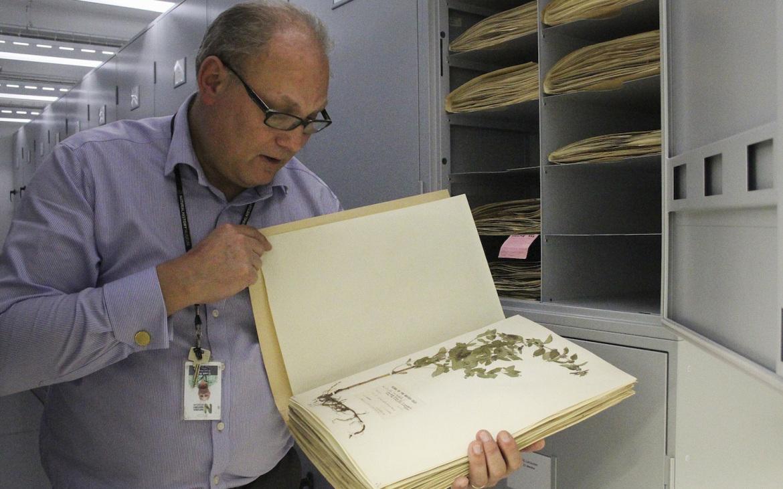 O herbário tem apenas as espécies nativas do Reino Unido