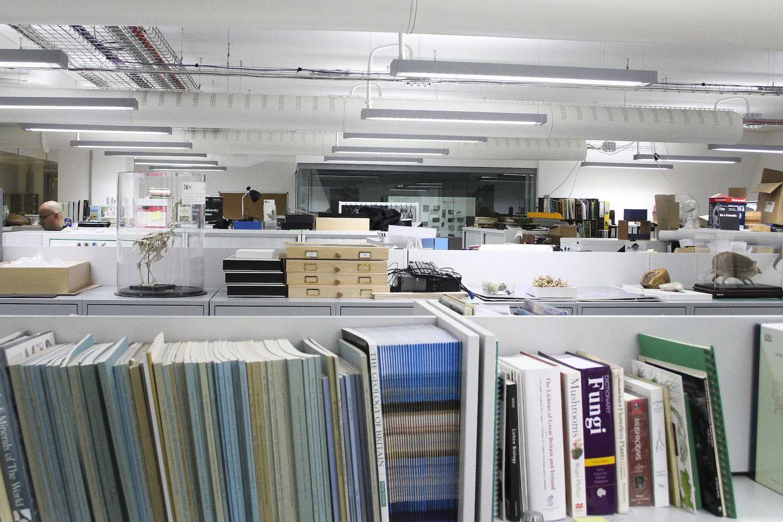 Na biblioteca há guias de identificação, microscópios, computadores e colecções de espécimes