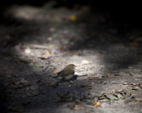 uma-pequena-ave-no-chão