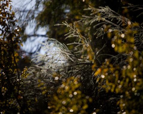 ramos de um arbusto