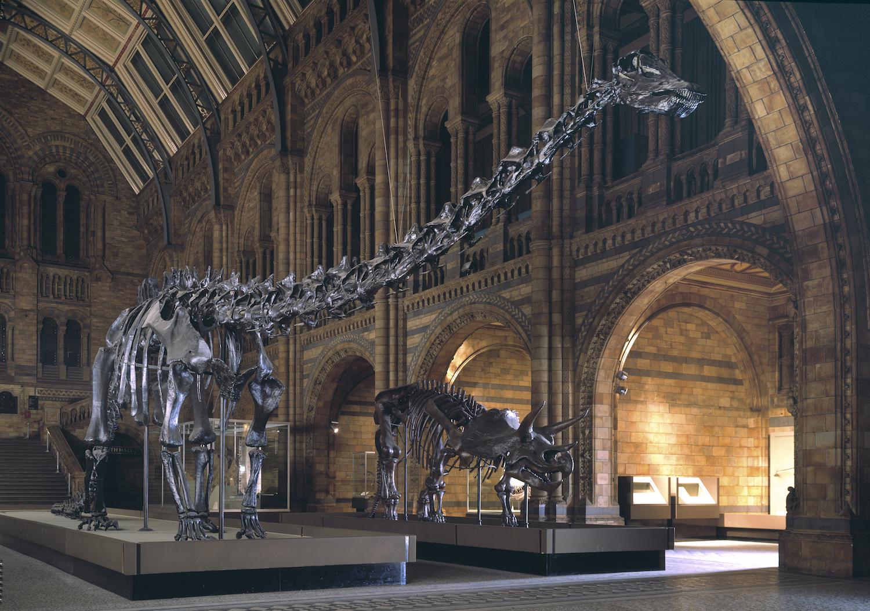 Diplodocus (à esquerda). Fotografia: Museu de História Natural de Londres