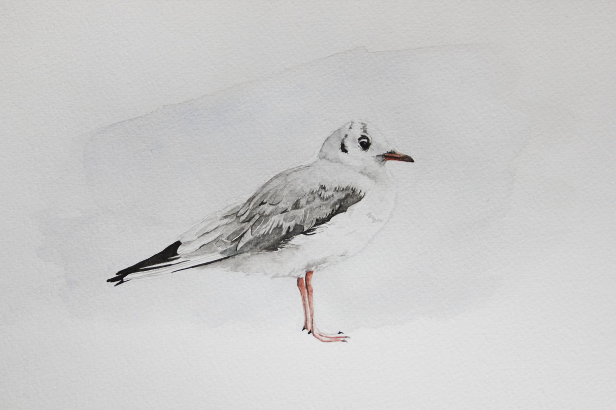 Ilustração: Helena Geraldes (Aguarela)