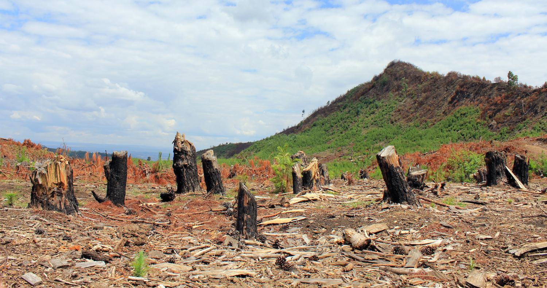 A desflorestação de Ankaratra é outro factor de stress para os anfíbios de Madagáscar Fotografia: Gonçalo M. Rosa