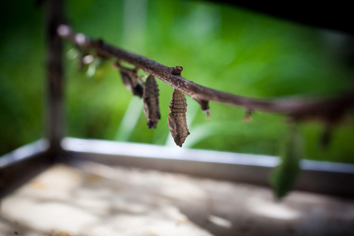 Reabertura do borboletário do Jardim Botânico do Museu de História Natural. Foto: Joana Bourgard