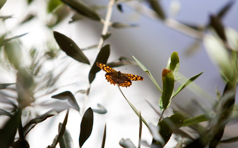 borboleta pousada num ramo