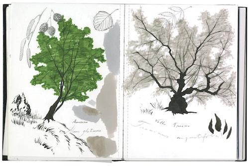 Caneta de pincel (tinta-da-china), na silhueta dos troncos e ramos; e caneta de feltro com ponta de pincel, na silhueta das copas