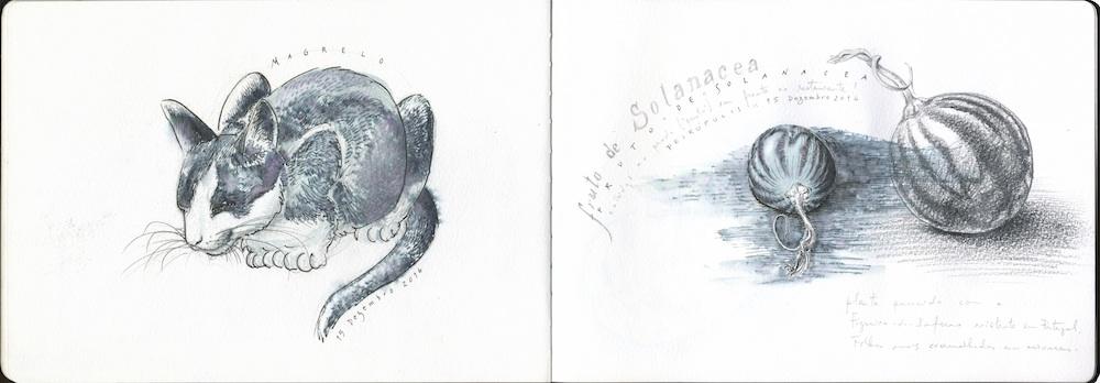 Desenho com caneta de feltro aguarelável, seguido de uma passagem com pincel de água, diluindo os traços previamente desenhados