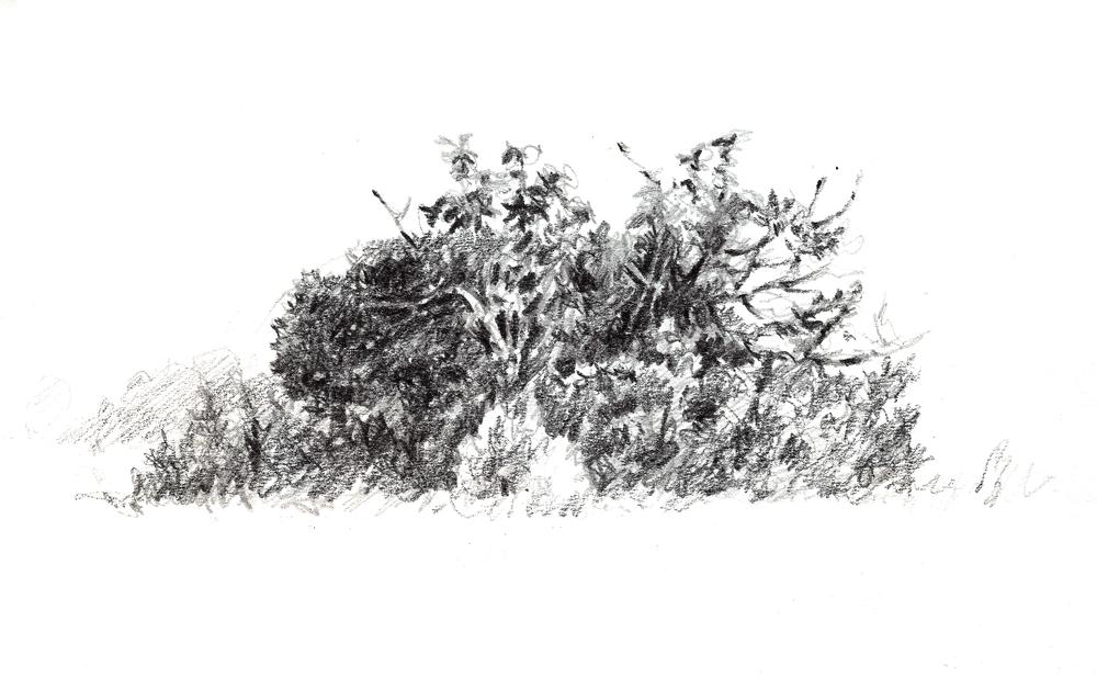 Figueira e oliveira