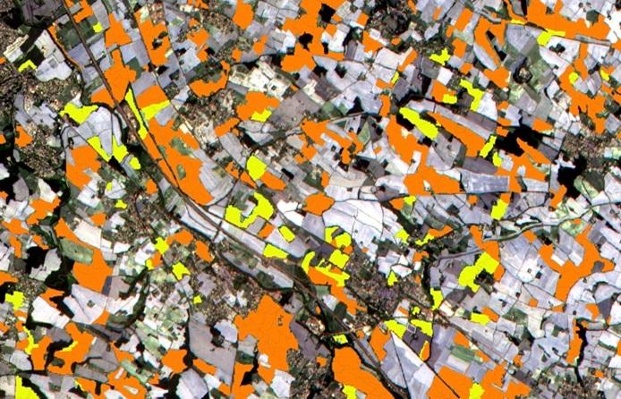 Imagem captada a 6 de Julho perto de Toulouse (França), que distingue entre colheitas de girassol (a laranja) e de milho (amarelho). Foto: ESA