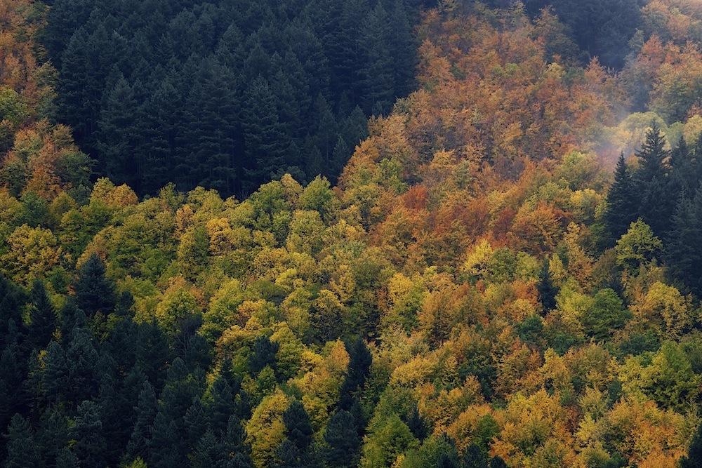 A magnífica floresta do Vale de Manteigas. Parque Natural da Serra da Estrela, Outono