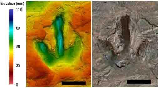 Pegada do dinossauro mais pequeno. A escala de cor serve para mostrar a profundidade da pegada. Imagem: Pernille Venø Troelsen