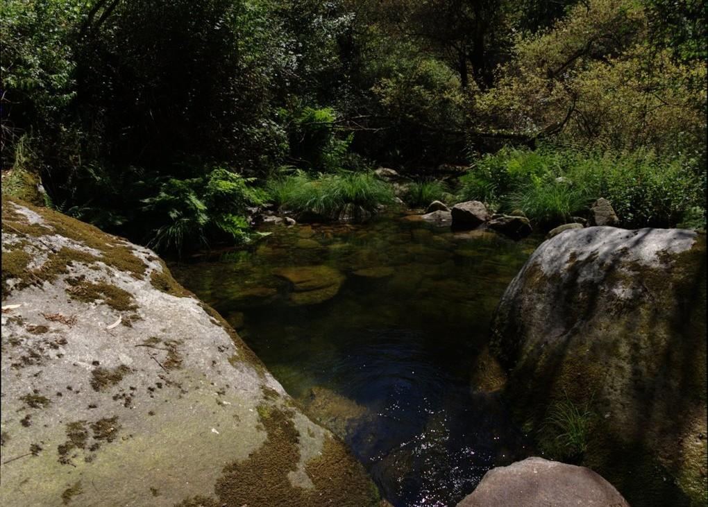 Pormenor da paisagem na Serra do Caramulo. Foto: Milene Matos