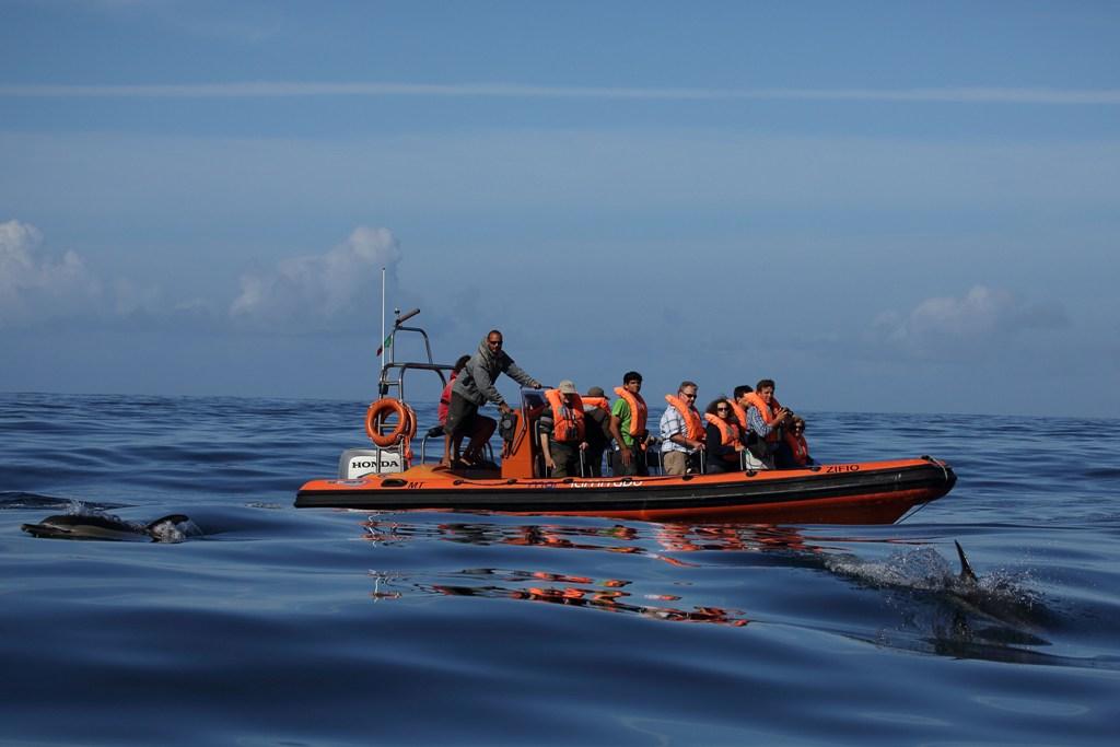 Observação de cetáceos, em Sagres. Foto: Jorge Meneses