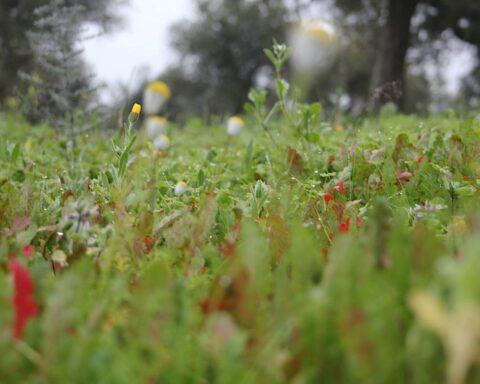 um-prado-com-ervas-silvestres-e-algumas-flores