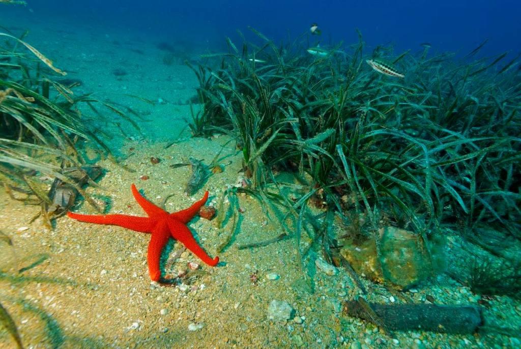 Foto: OCEANA / Juan Carlos Calvin