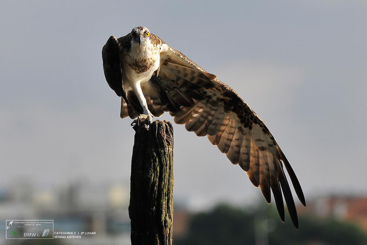 2º Prémio para a categoria Aves. Foto: Sérgio Esteves