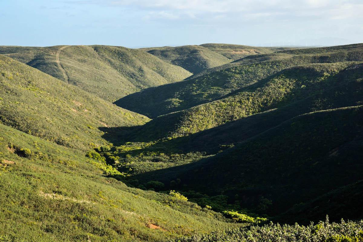 Vales costeiros com matos de esteva, PNSACV - Vila do Bispo