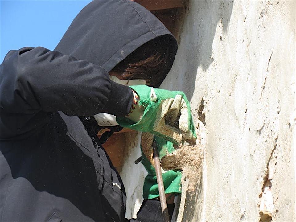Limpeza dos ninhos. Foto: LPN