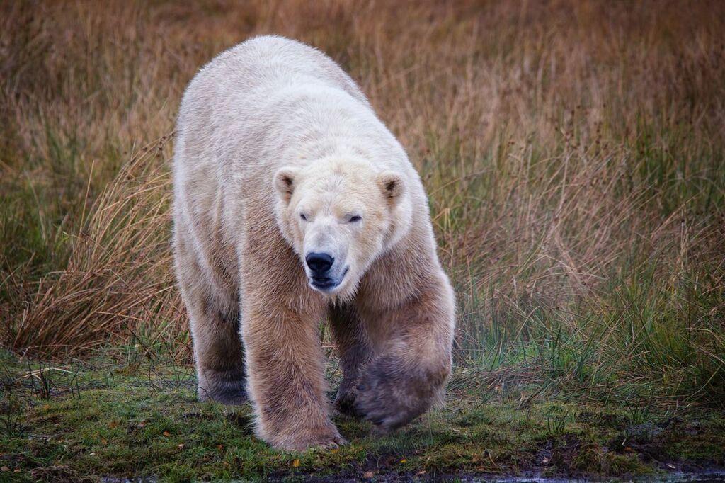 Arktis. Foto: RZSS