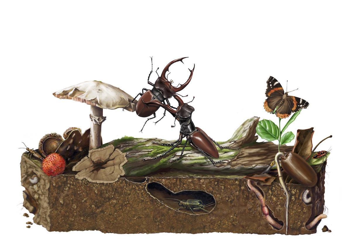 Micro-habitat florestal. Ilustração: Mafalda Sofia Varela Paiva