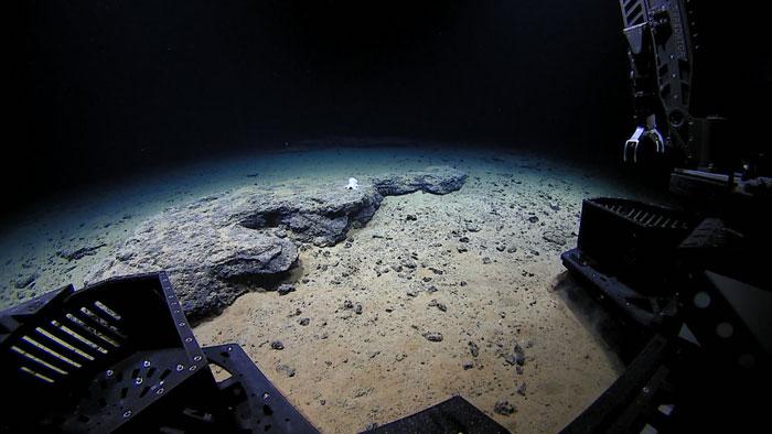 O ROV aproxima-se do polvo, a 4.290 metros de profundidade