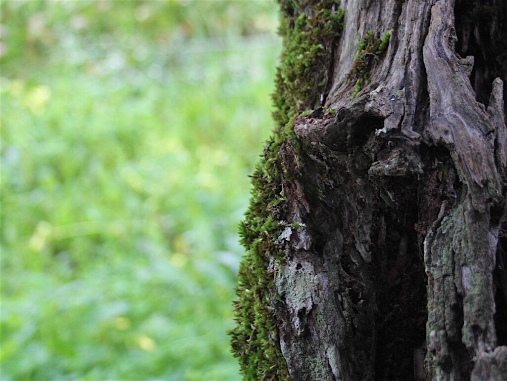 tronco de uma árvore com musgo