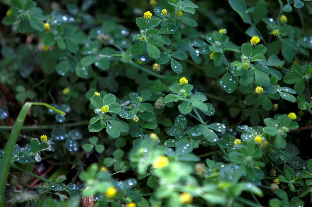 tapete verde de plantas silvestres