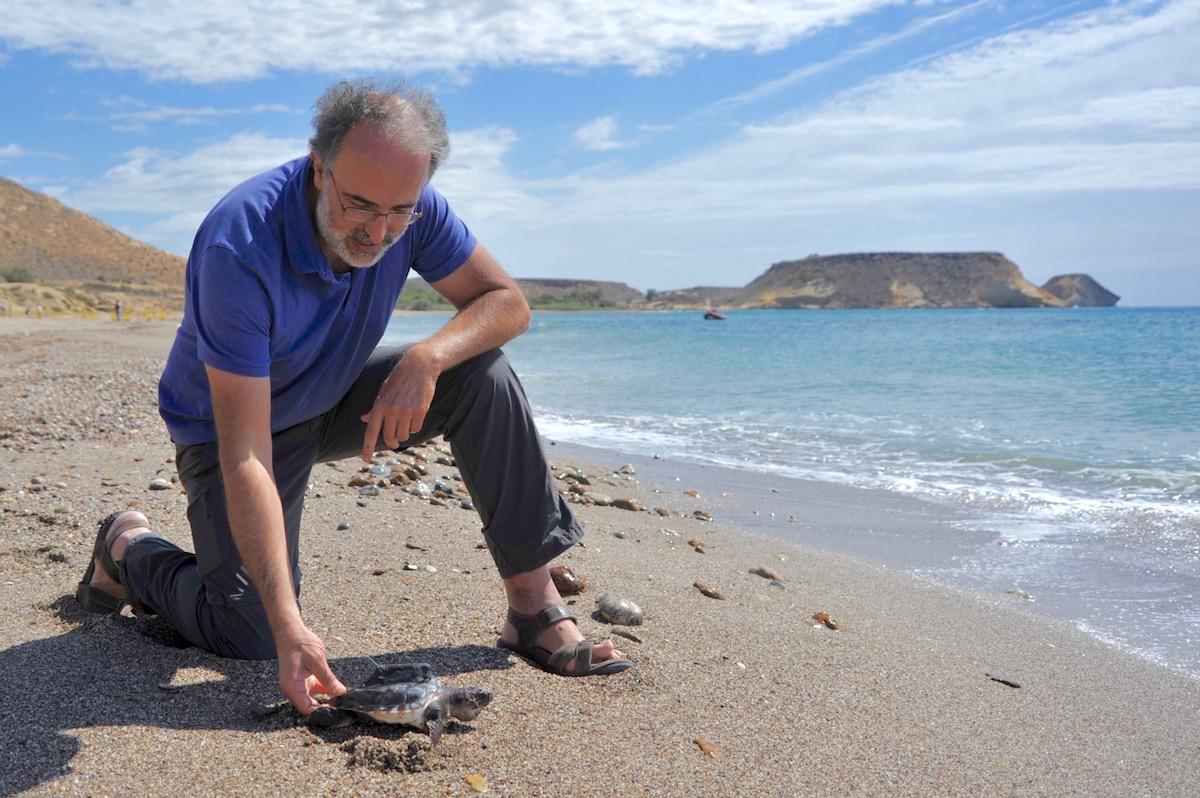 Adolfo Marco com uma das tartarugas. Foto: Comunicação CSIC