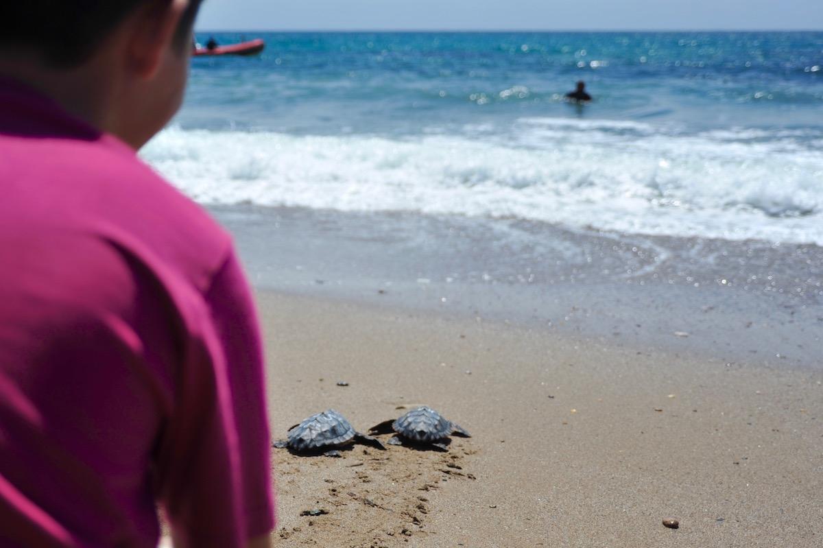 Duas tartarugas dirigem-se para o mar. Foto: Comunicação CSIC