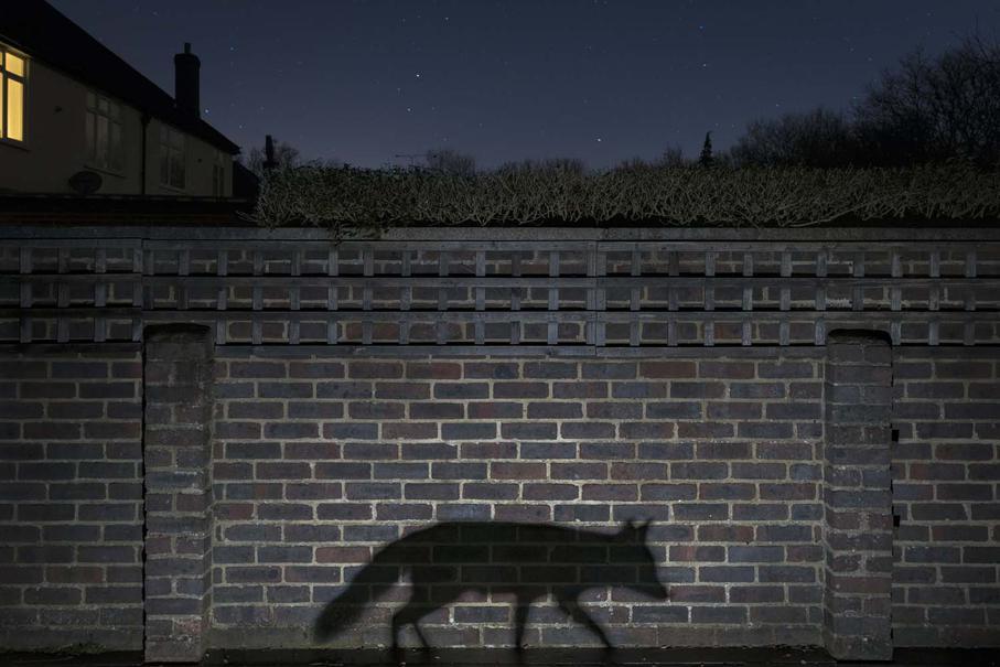 Foto vencedora: Richard Peters (Great Britain)