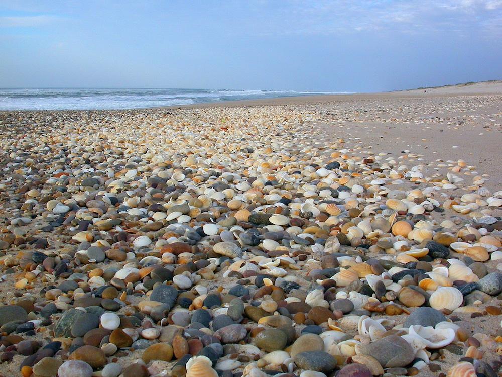 Praia com depósito de conchas e seixos