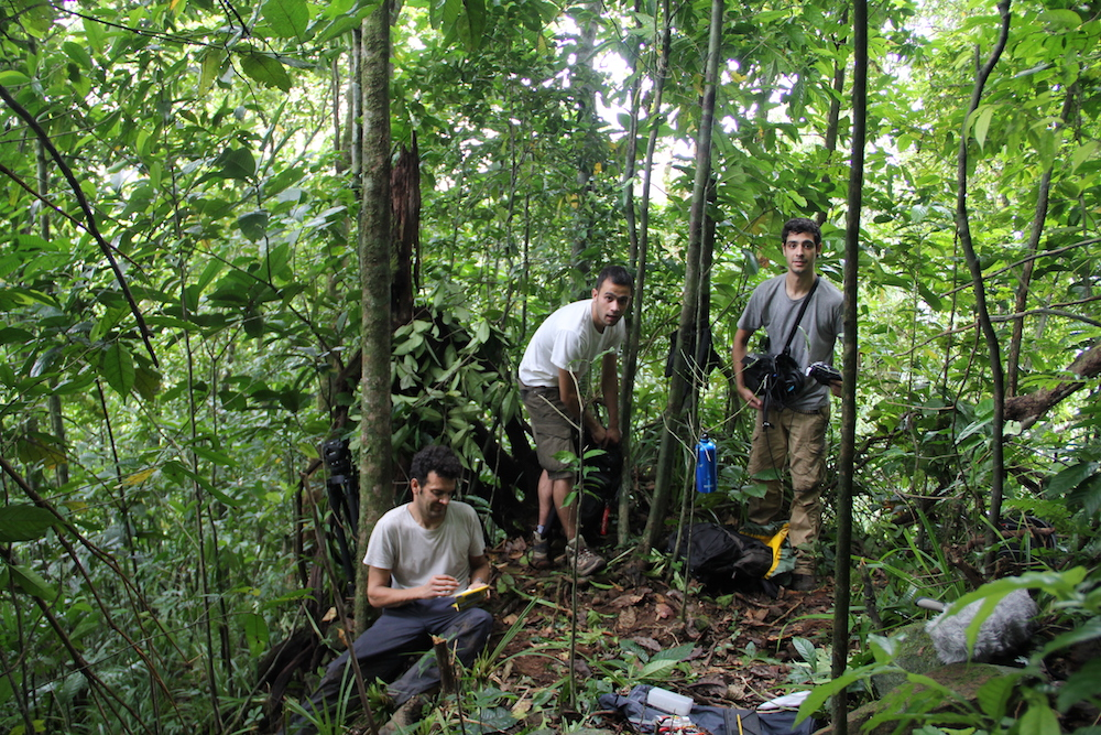 Na floresta de São Tomé
