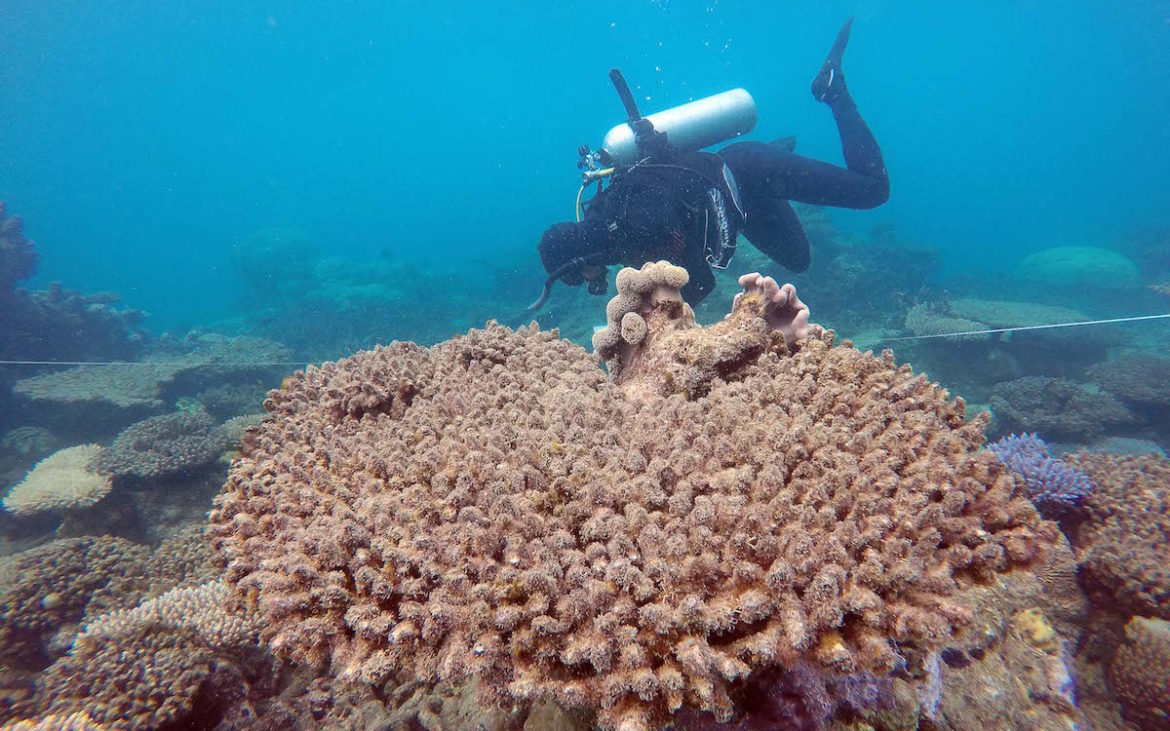Foto: Andreas Dietzel/ARC Centre of Excellence for Coral Reef Studies