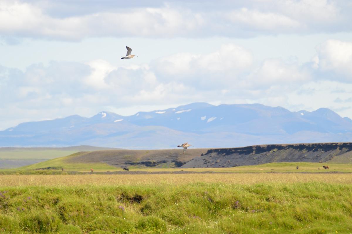 Paisagem da Islândia. Foto: Verónica Mendez