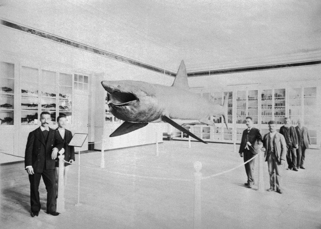 Exposição na Politécnica, em 1897. Foto: Arquivo do Museu de Marinha