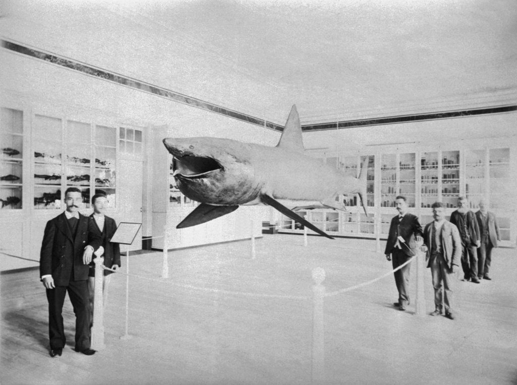 Exhibition at the Polytechnic in 1897. Photo of the Navy Museum Archive