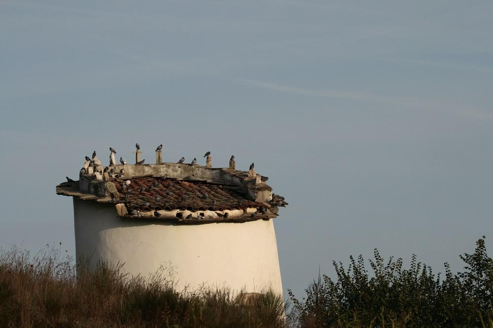 pequeno-edifício-branco-e-circular-com-pombos-pousados-em-cima