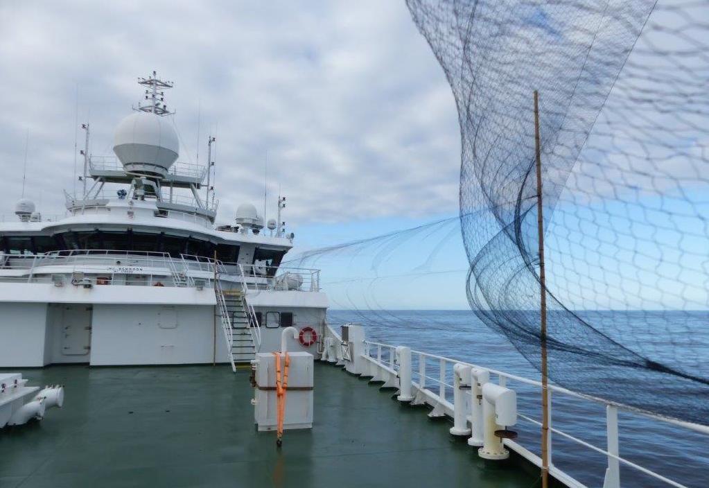 Redes verticais montadas no navio para capturar pequenas aves marinhas no meio do Atlântico profundo. Foto: Paulo Catry