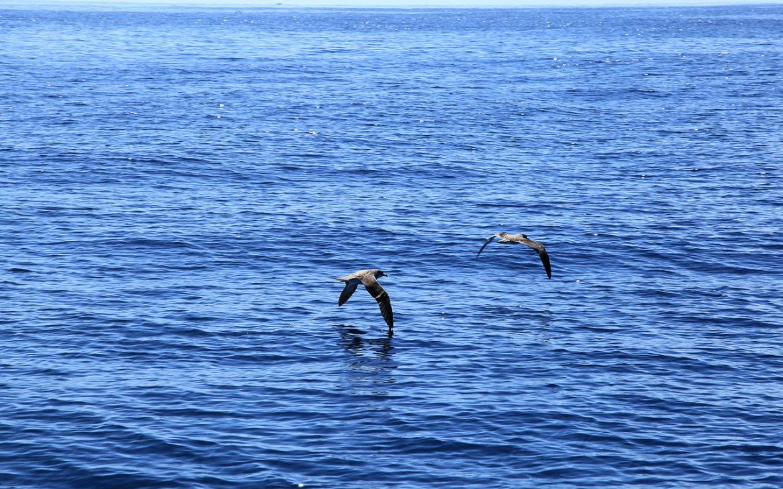 cagarras-voam-junto-ao-mar