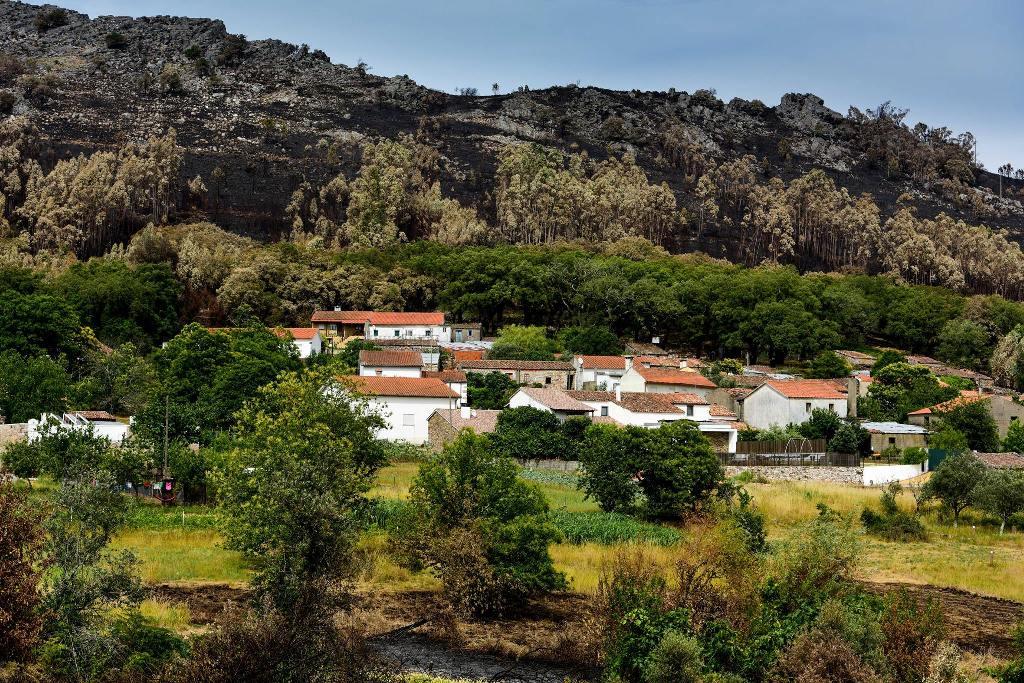 casas-brancas-e-intactas-de-uma-aldeia-rodeadas-por-uma-faixa-de-arvores-verdes-e-na-parte-de-fora-paisagem-de-eucaliptos-queimados