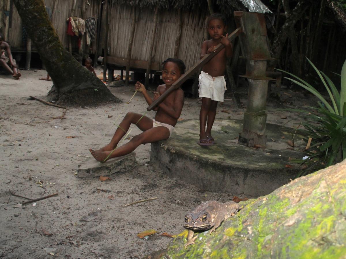 Sapo-comum-asiático numa zona urbana de Madagáscar. Foto: Franco Andreone