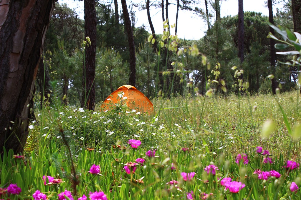 a-small-orange-tent-stands-on-a-meadow