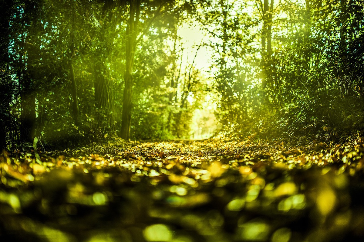 Floresta. Foto: Aymanjed Jdidi/Pixabay