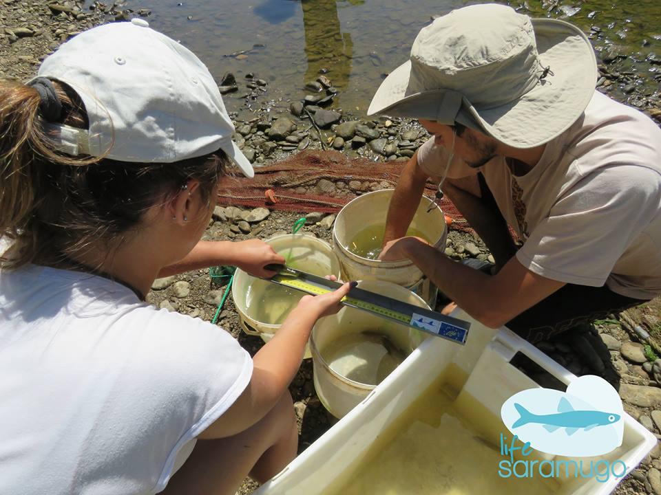 Biólogos medem os peixes recolhidos da ribeira do Vascão