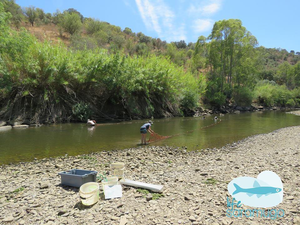 Biólogos recolhem redes para recolher peixes exóticos na ribeira do Vascão