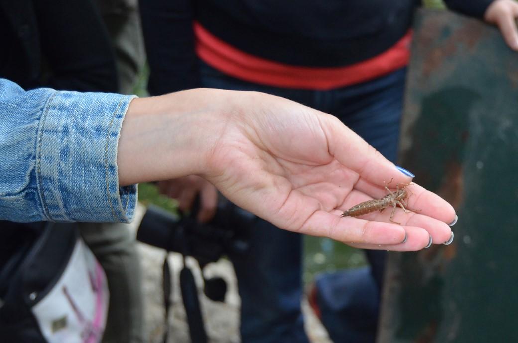 insecto pousado numa mão