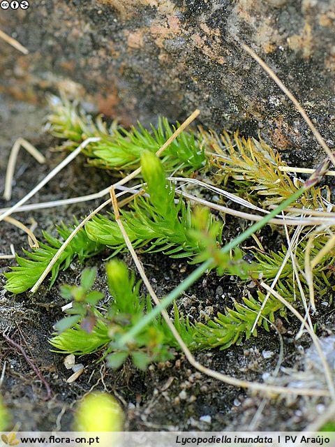 pequena planta verde