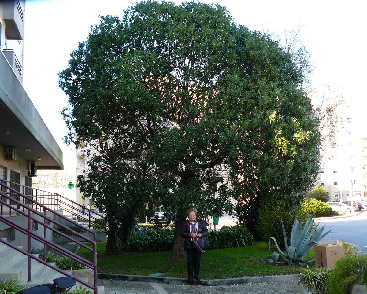 Mióporo em forma de árvore