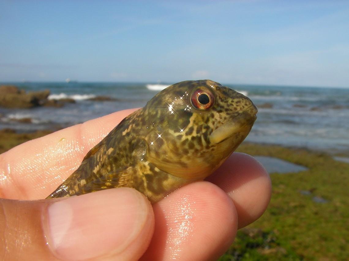 um pequeno peixe seguro por uma mão
