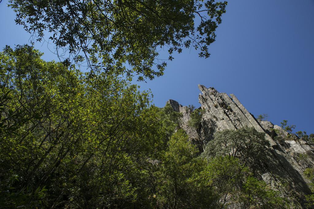 copas das árvores com rochedo ao longe